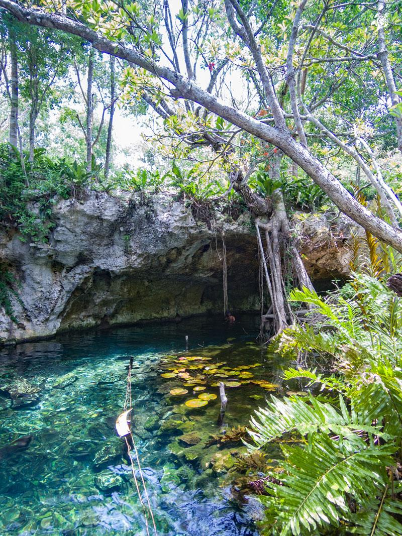 Gran Cenote from above with it's beautiful water lillies