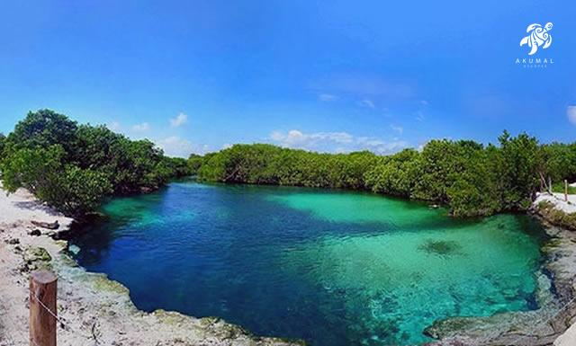 Casa Cenote is beautiful above ground cenote perfect for snorkeling