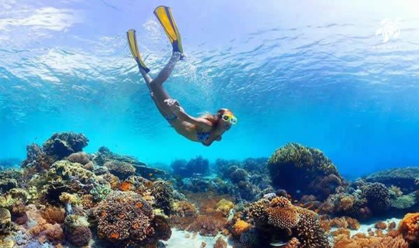Akumal's reefs have many types of coral for great snorkeling and diving