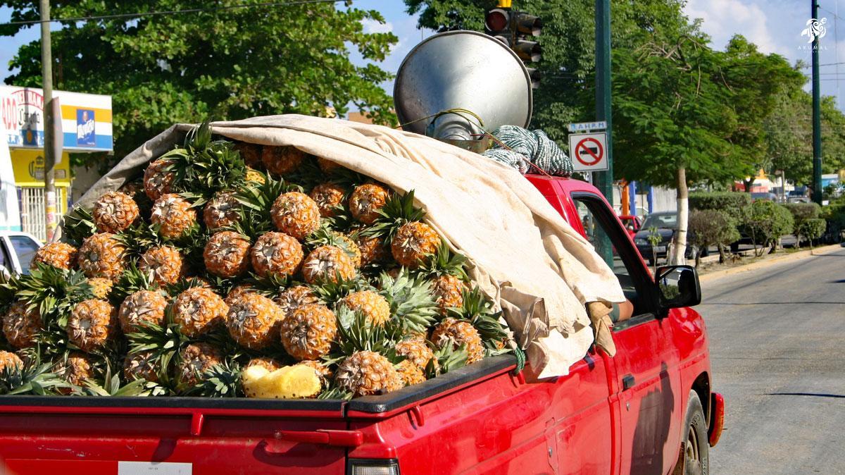 Fresh pineapples going to market