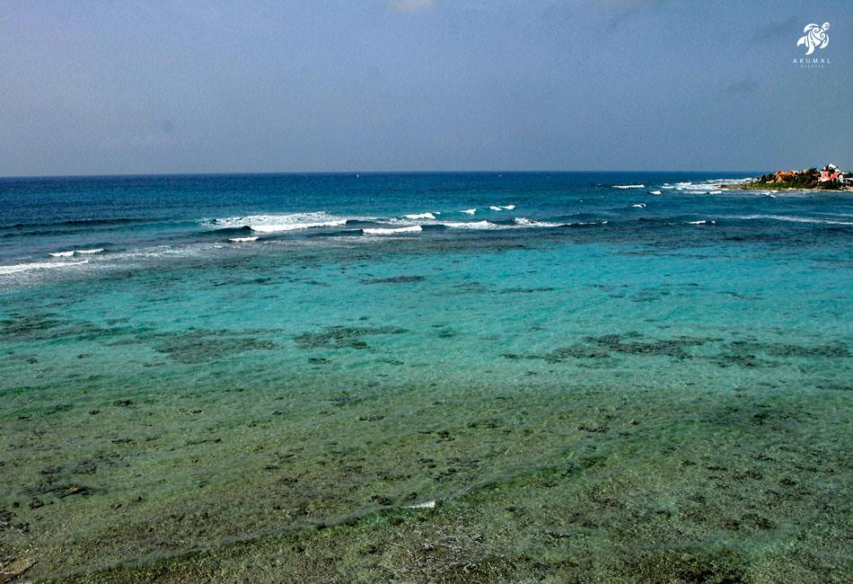 Our gorgeous living reef as viewed from La Sirena's beach