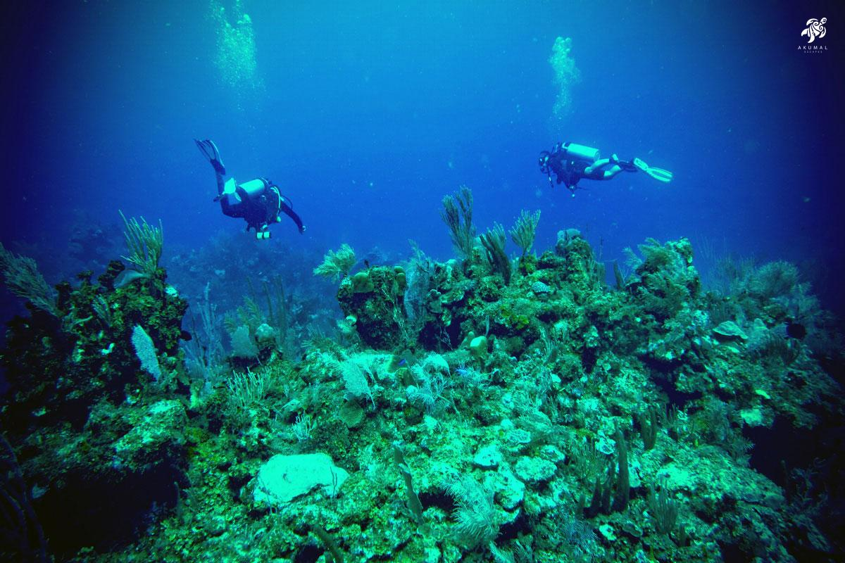 Two divers enjoying the meso-American reef