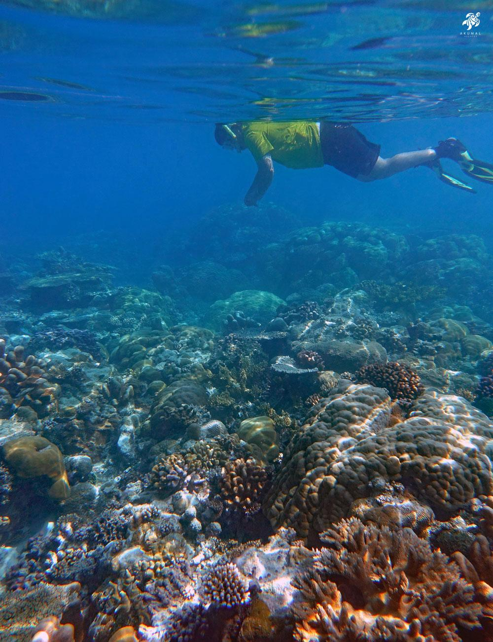 Akumals' reefs are alive with both hard and soft corals
