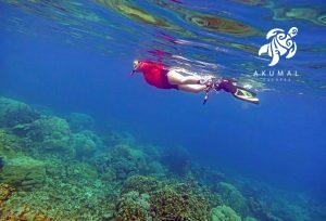 Snorkeling Akumals' reefs is easy and there's always something to see