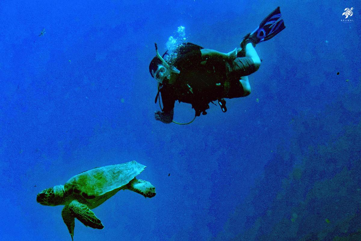 A diver with a green turtle