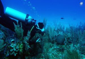 Easy and fun diving in the Meso-American reef