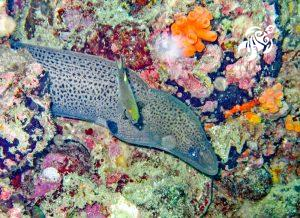 Underwater on the Meso-American reef: A sea eel and sun coral