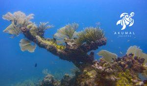 Underwater on the Meso-American reef: A huge coral tree with sea fans and reef fish