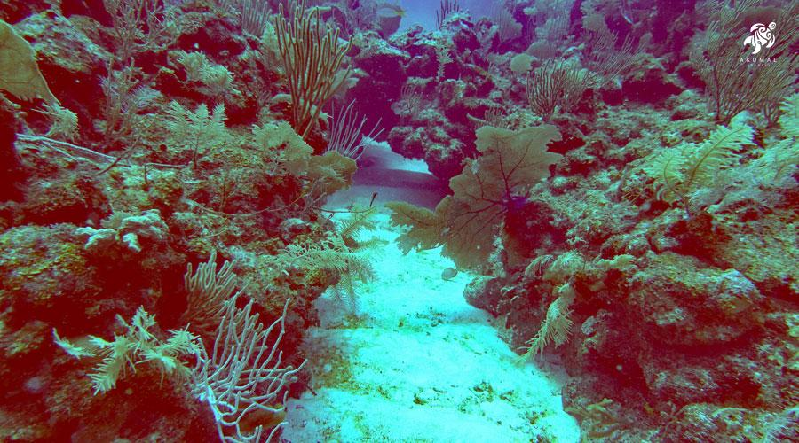 Underwater on the Meso-American reef: A channel between two coral islands