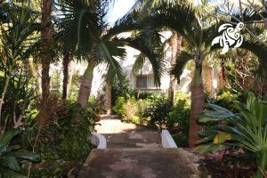 Tranquility, La Sirena #8, The Garden Side Entrance Is Shaded with Tropical Palms