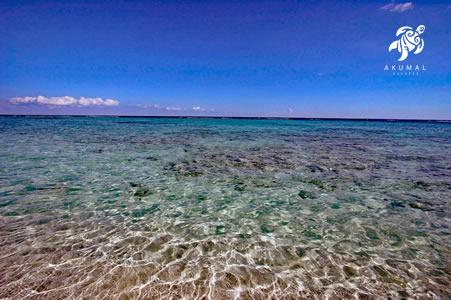 The water just off our beach, a living reef and sparkling clarity