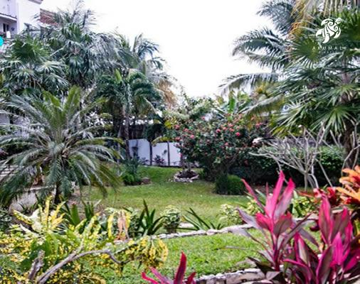 La Sirena gardens are filled with tropical blooming plants and expansive lawns